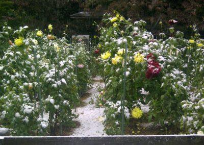 American Horticultural Society -- River Farm  October Snow in Falls Church VA
